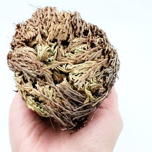 Rose of Jericho Resurrection Plant - Incense and Herbs - Elevated Metaphysical