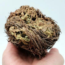 Load image into Gallery viewer, Rose of Jericho Resurrection Plant - Incense and Herbs - Elevated Metaphysical