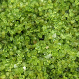 Peridot Chips - Elevated Metaphysical