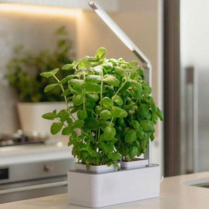 TapGrows: Self-Caring Smart Garden