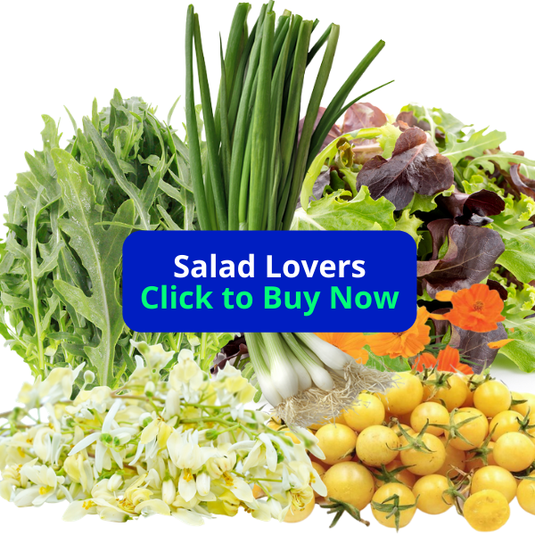 Salad Lovers