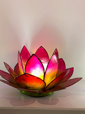 Red Green Lotus Flower - pixi-daisy