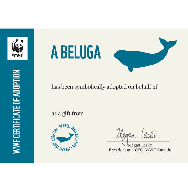 Beluga adoption certificate