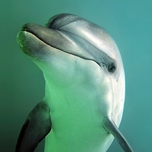 Image result for images dolphin