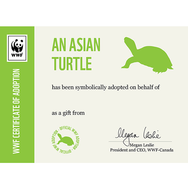 Asian Turtle