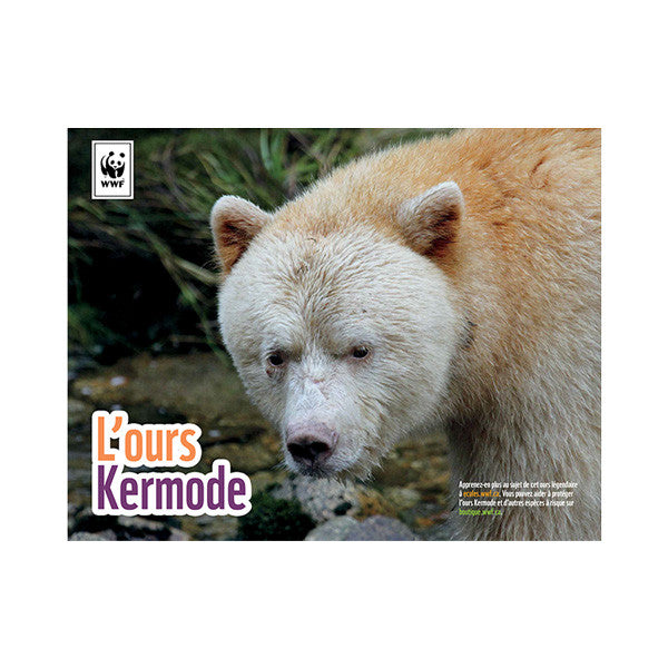 Trousse éducative d'adoption de l'ours Kermode