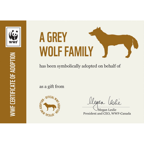 Grey Wolf Family