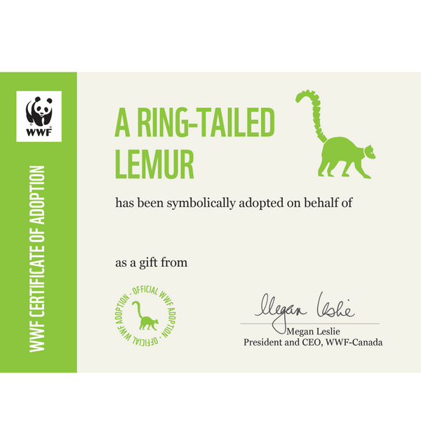 Ring-tailed lemur adoption certificate
