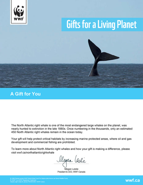 Help a Right Whale Swim Freely