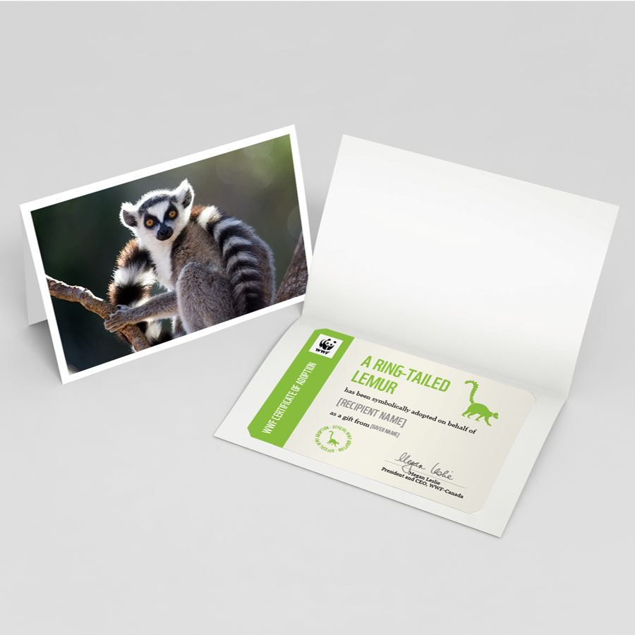 Ring-tailed lemur card
