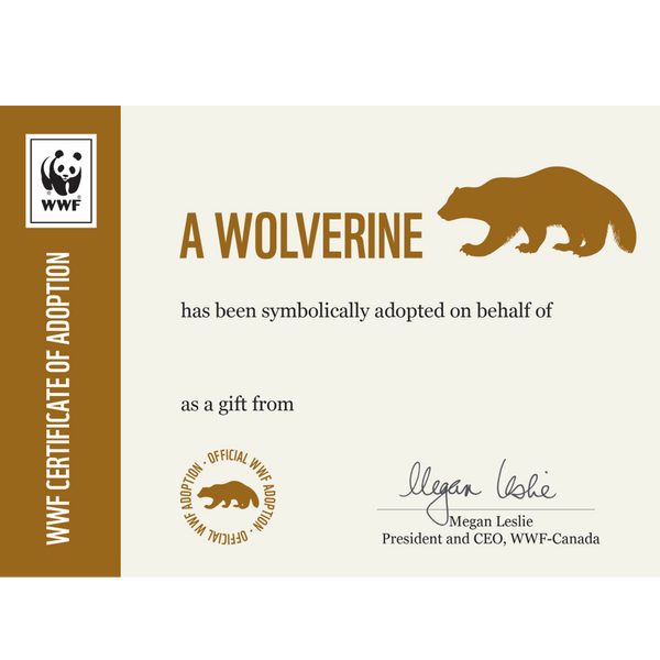 Wolverine adoption certificate