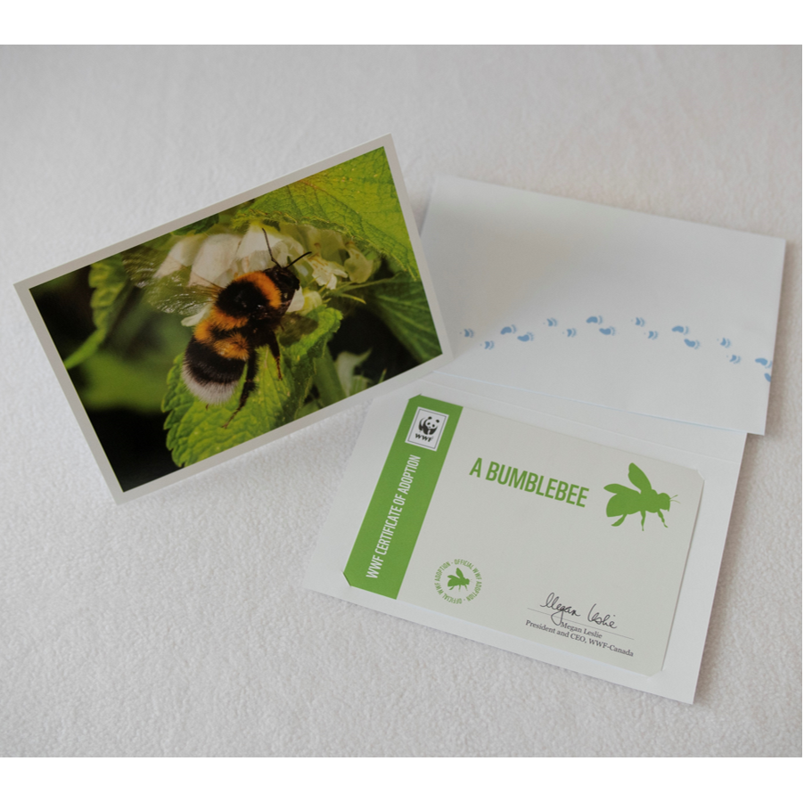 Bumblebee adoption card