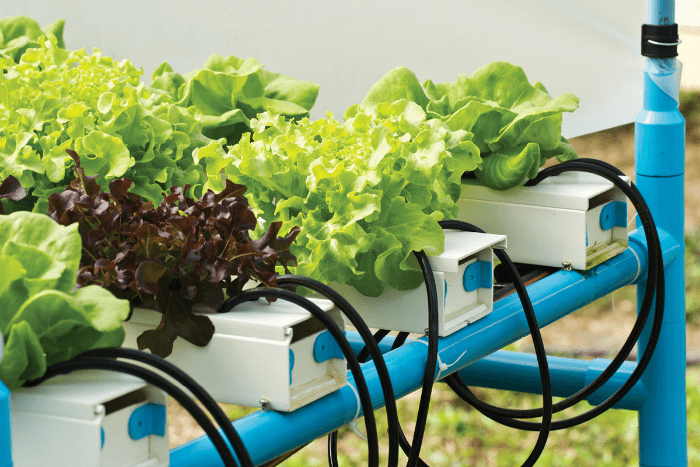 Making the Most of Hydro Nutrients for Plants