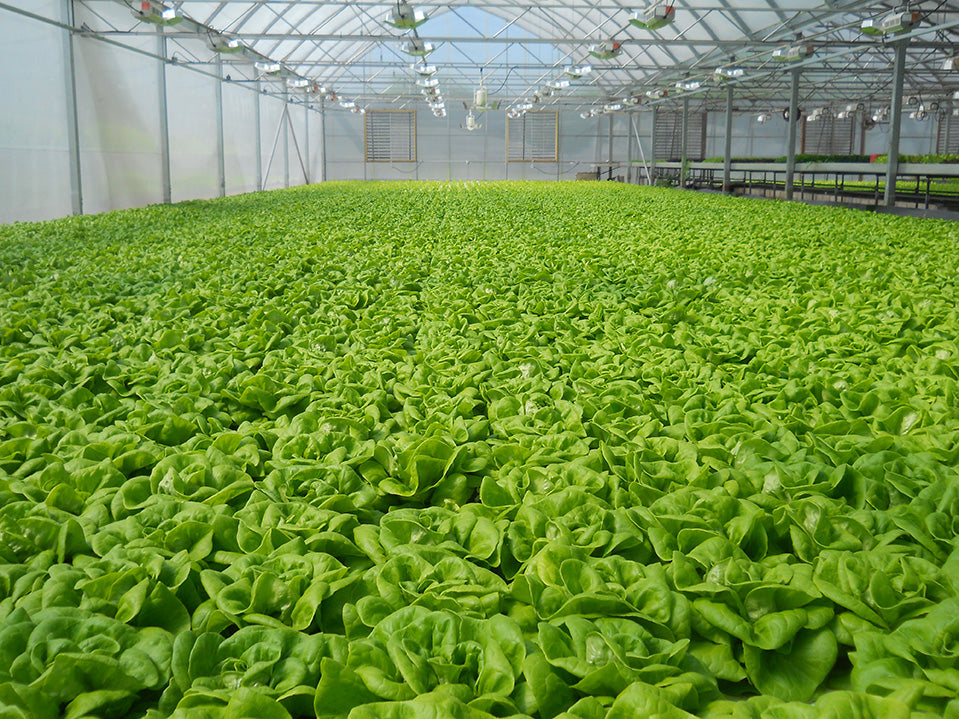 Hydroponic Nutrient Management: What Every Grower Should Know