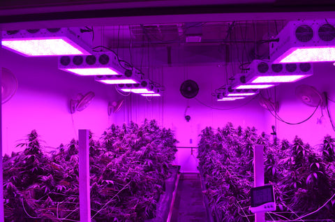 Guide To LED Grow Lights
