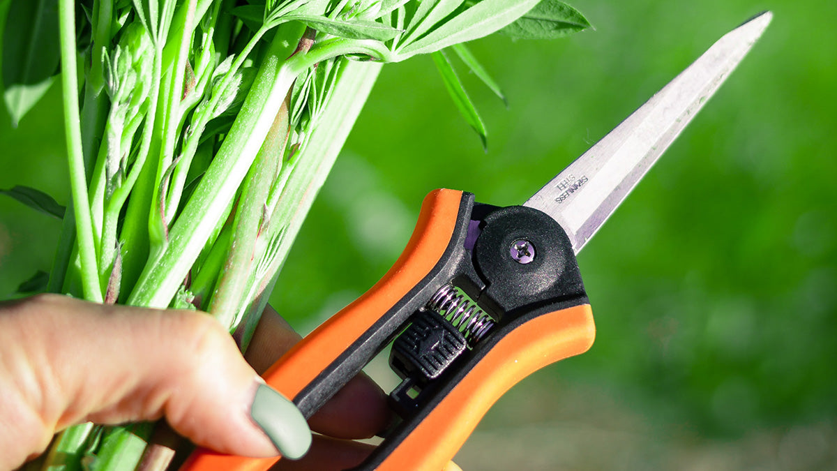 Should You Sterilize Your Pruners?