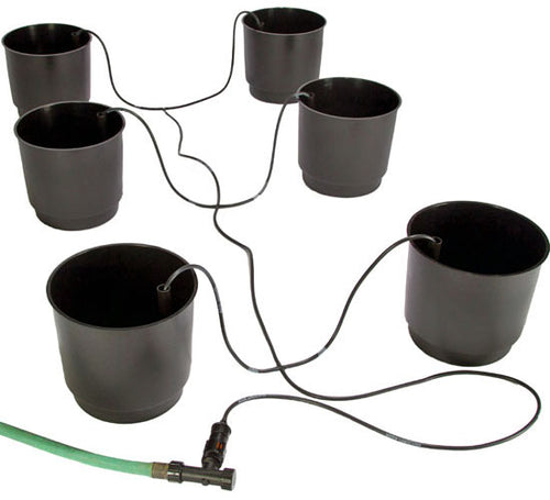 Eco Grow 6-pack System