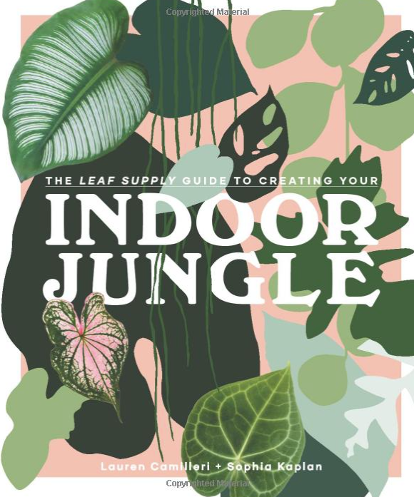 Creating Your Indoor Jungle