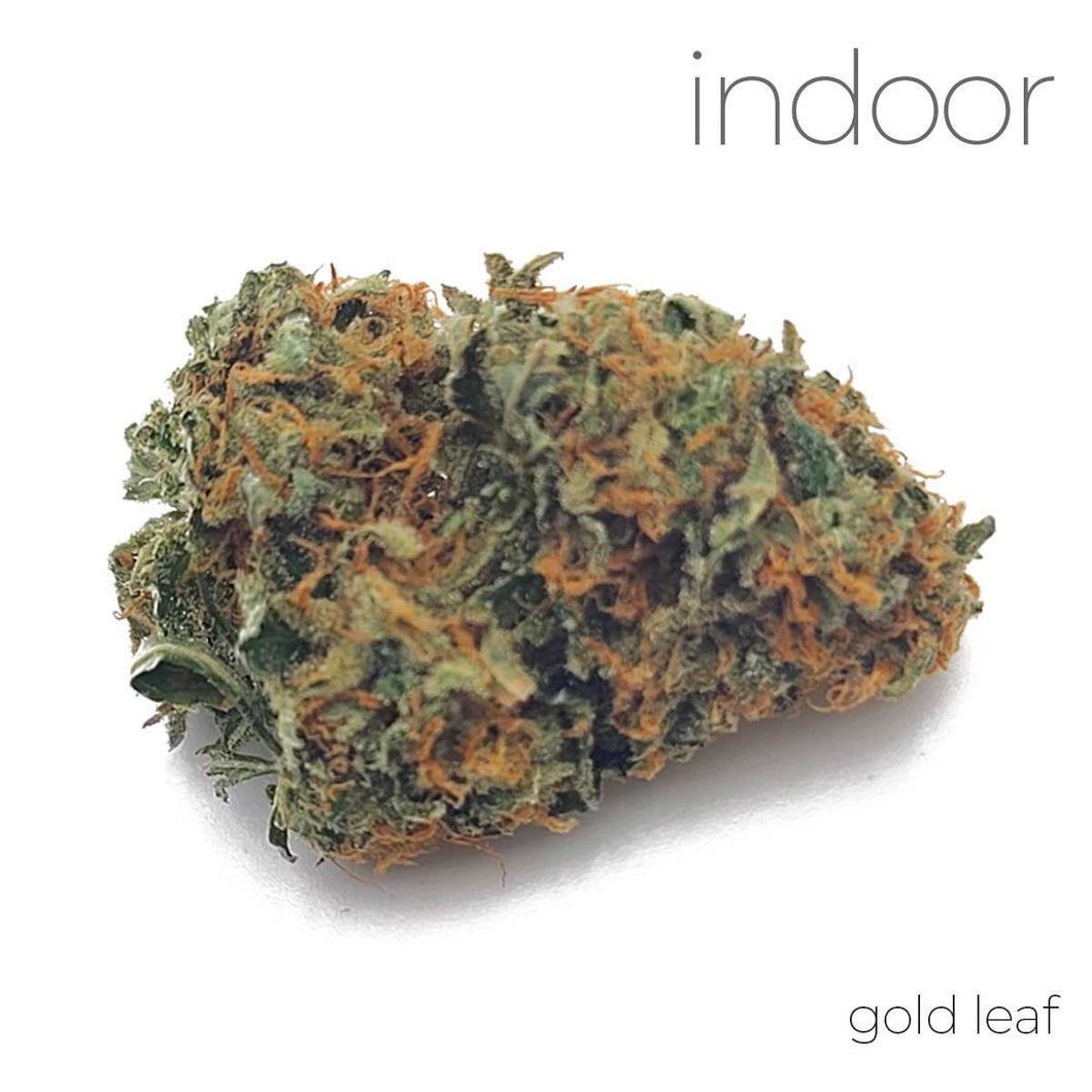 Indoor Flower - Gold Leaf - 24.20% THC