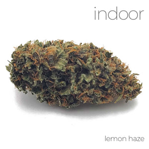 Indoor Flower - Lemon Haze - 26.04% THC