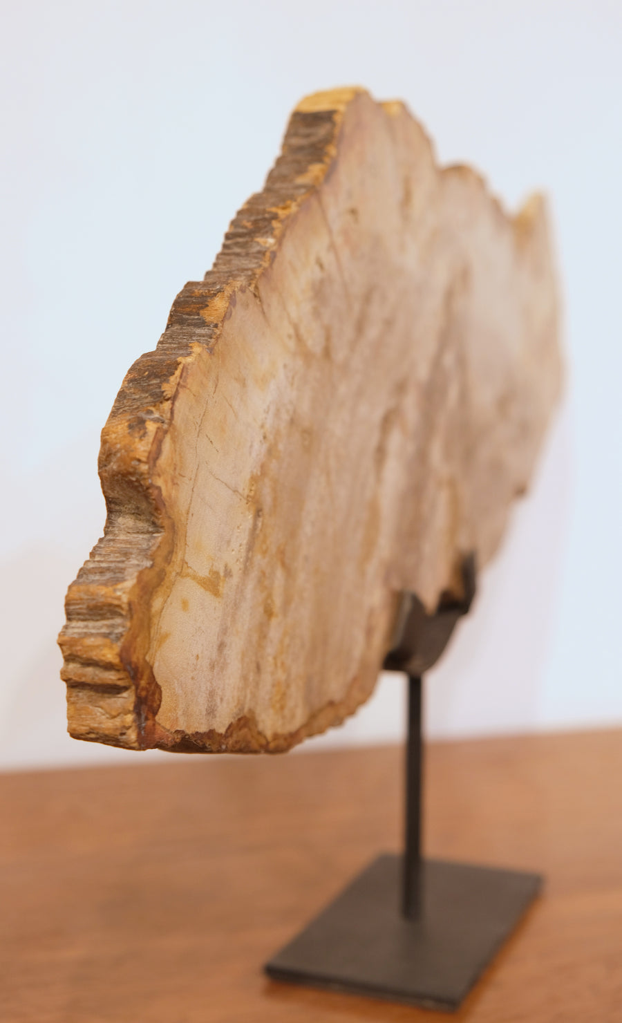 PETRIFIED WOOD SLICE