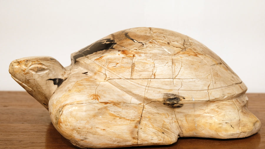 LARGE PETRIFIED WOOD CARVED TURTLE