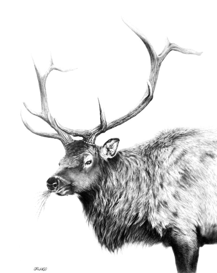 PREVISION ELK- ORIGINAL DRAWING