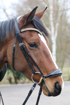 Light colorado and clear browband