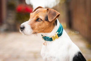 Kentucky Velvet Dog Collars