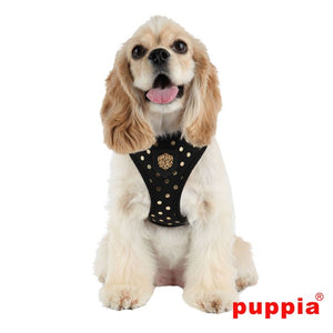 Black Modern Dotty Harness