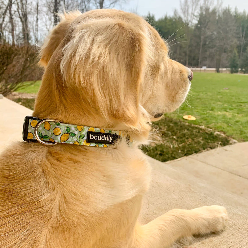 Dog Collar - Lemons