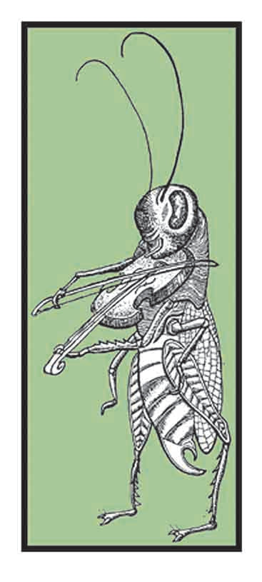 Grasshopper Fiddling