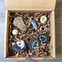 Fossil Set, Fossil Kit, Fossil Collection
