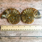 "Ammonite Fossil Pair w/ Calcite Chambers: 3.45"" Length, 5.2oz (148g) Polished"