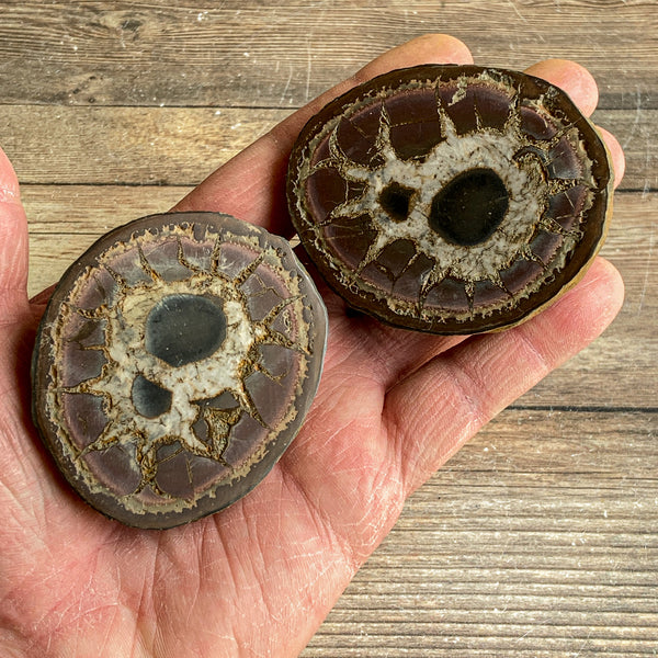 "Septarian Concretion Nodule Fossil Pair: 2.65"" Long, Polished Split"
