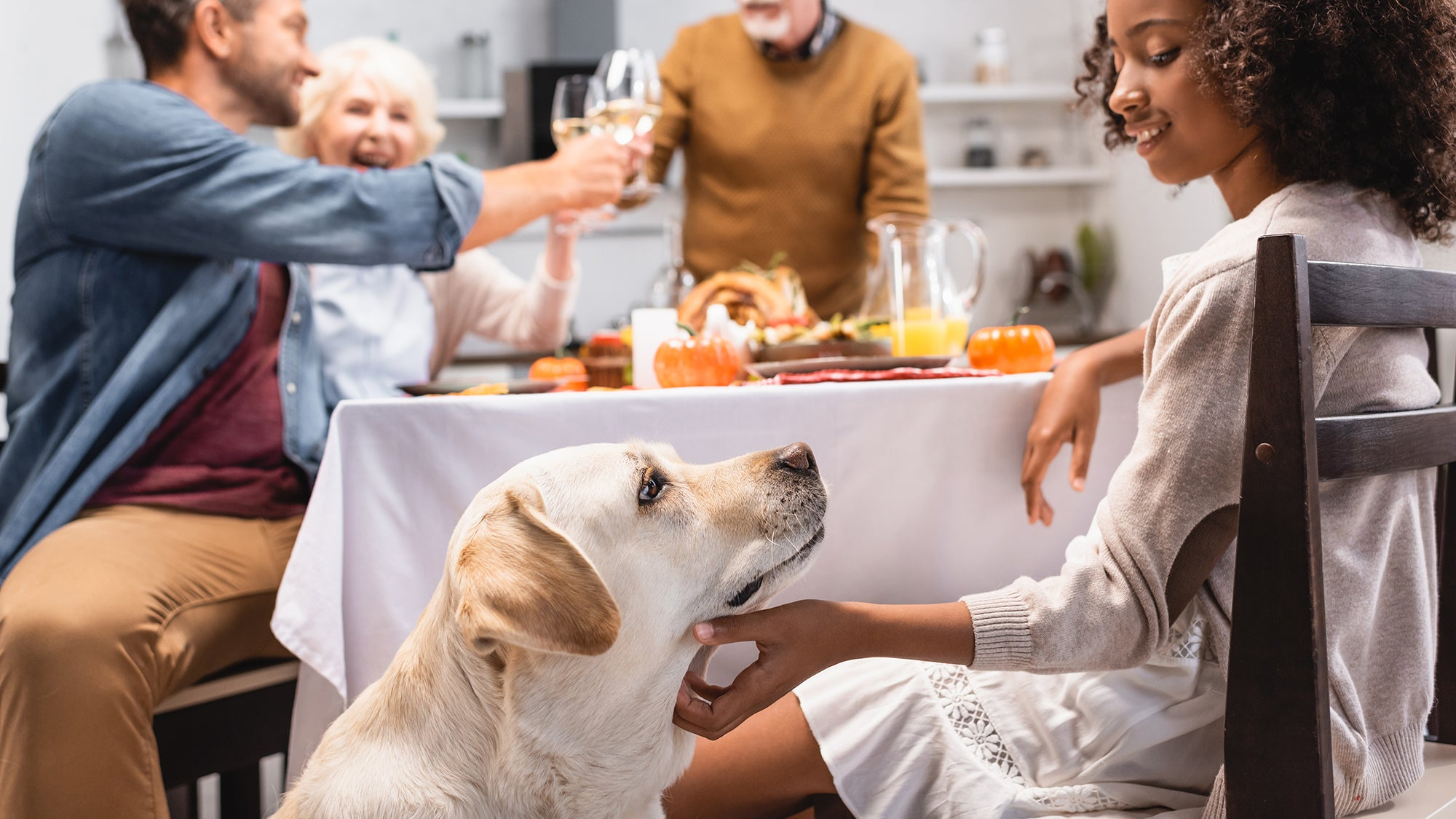3 Tips to Keep Your Pets Calm During the Holidays