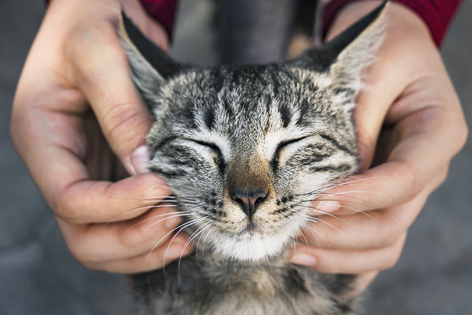 Tips and Tricks for a Calmer and Happier Cat