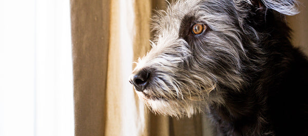 How to Recognize Anxiety in Our Pets, and What Might Help