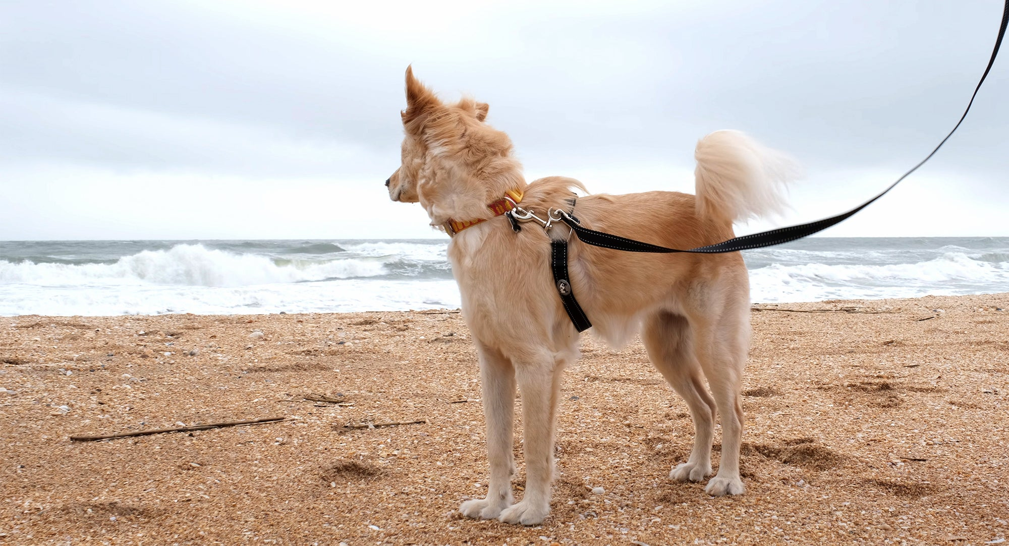 6 Tips for Better Walks with Your Dog