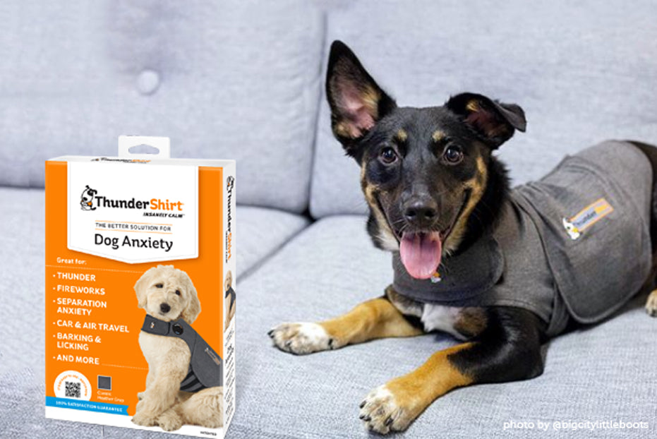 Four Tips for Making the Most Out of Your ThunderShirt