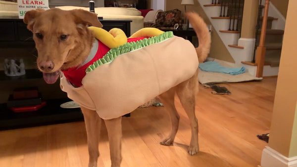 DIY ThunderShirt Hot Dog Costume Tutorial