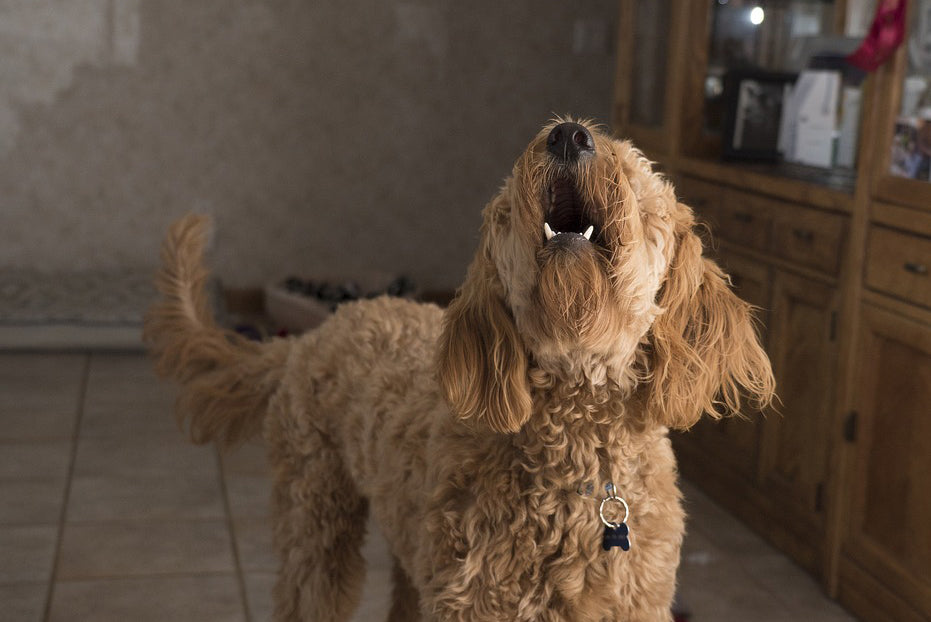 Could Your Dog's Barking be a Sign of Anxiety?