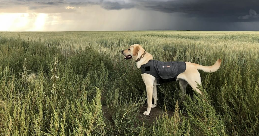 Tips to Help Your Dog to Stay Calm During a Storm