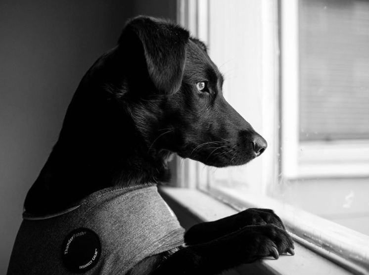 6 Tips to Reduce Your Dog's Separation Anxiety