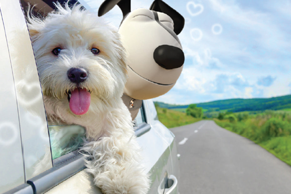 Using Pressure to Treat Dog Anxiety During Car Travel