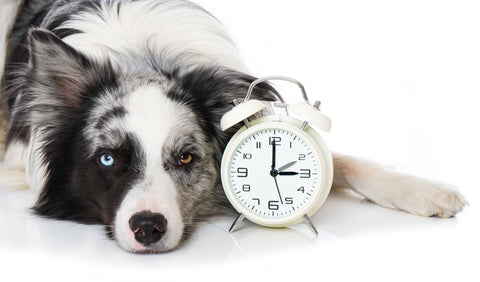 dog waiting by clock returning to office separation anxiety