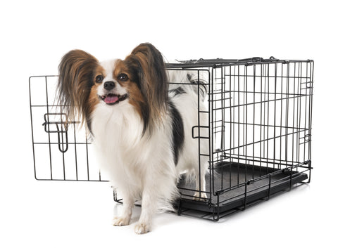 happy dog has escaped from a crate