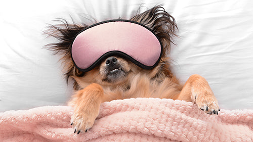 dog in bed with eyemask