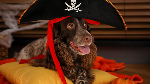 halloween dog in pirate hat costume