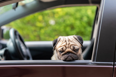 what is travel anxiety in a dog